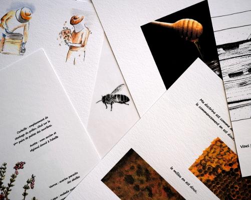 pascalebodin-carnettiste-raconteuse-de-nature-carnet-concarneau-finistere-miel-apiculture-abeille
